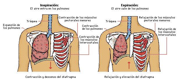 respiracion_proceso.jpg
